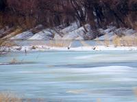 Слева на право: серая цапля, серая цапля, серая ворона, лебедь-кликун. Автор: Зирнит Денис