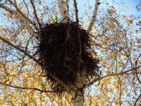 Гнездо. 2012