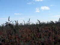 Курумбельская степь. Фото: Руденко Дмитрий