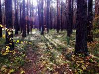 Артынский бор. Фото: Зирнит Денис