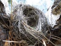 Гнездо. Фото: Зирнит Денис