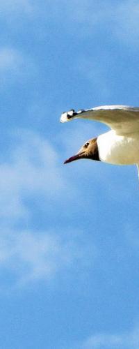 """Автор: Зирнит Денис. г. Омск, природный парк """"Птичья гавань"""". 23.07.11."""